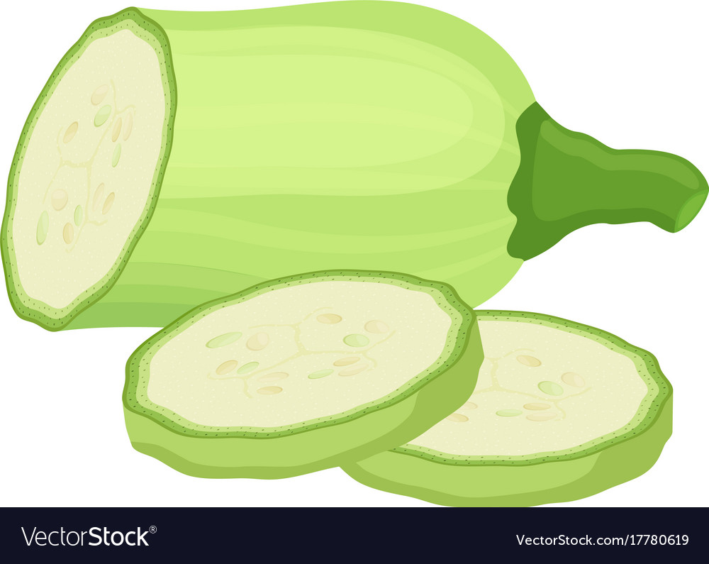 Squash vegetable drawing
