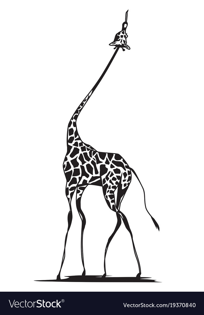 Giraffe eating leaves drawing