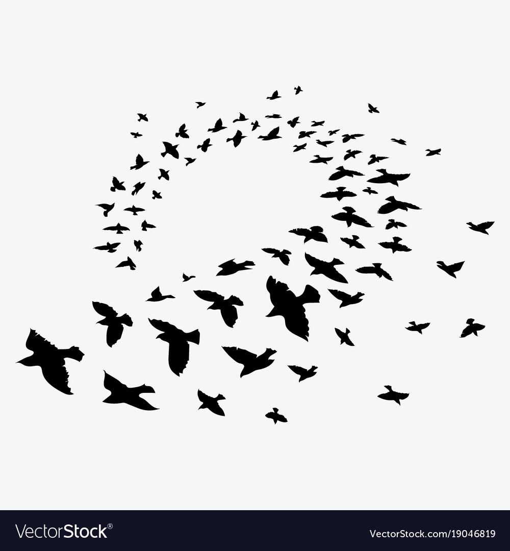 Birds silhouette flock