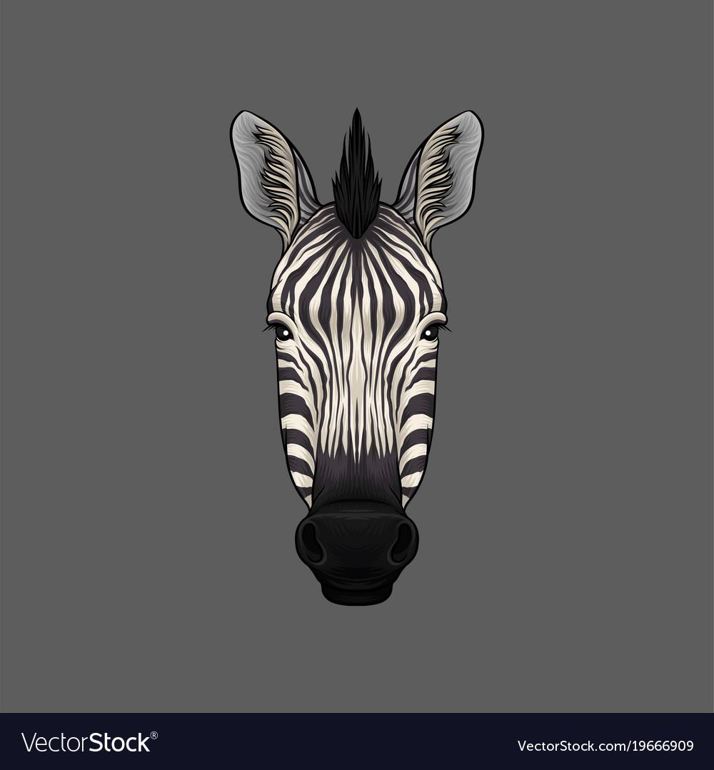 Zebra head vector