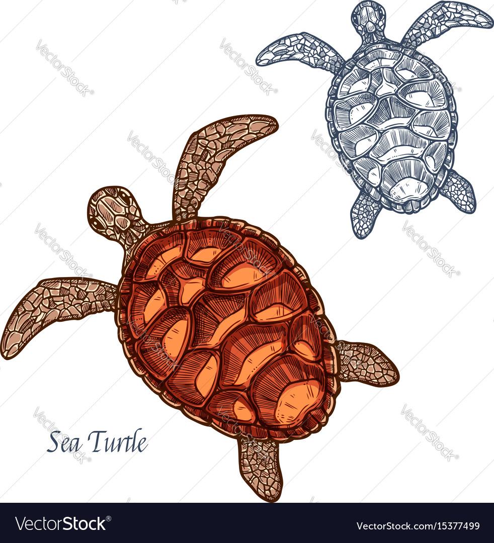 Sea Turtle Vector Images Stock Photos amp Vectors