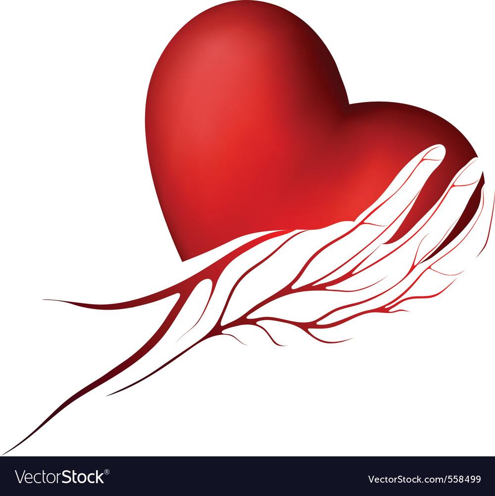 Human Heart Stock Images RoyaltyFree Images amp Vectors