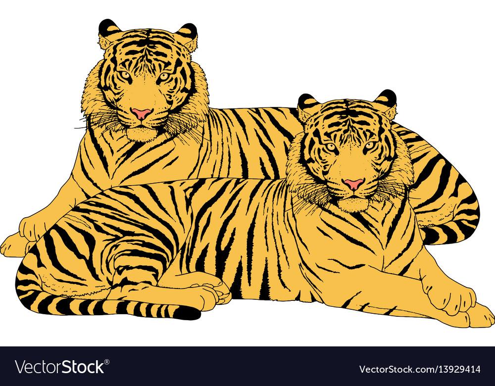 Wonderful tiger vector photographs