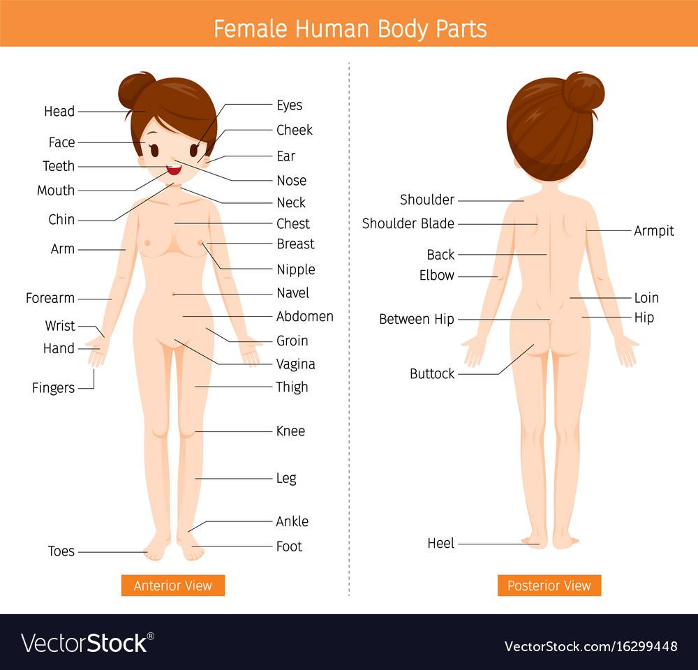 Anatomy of girl body