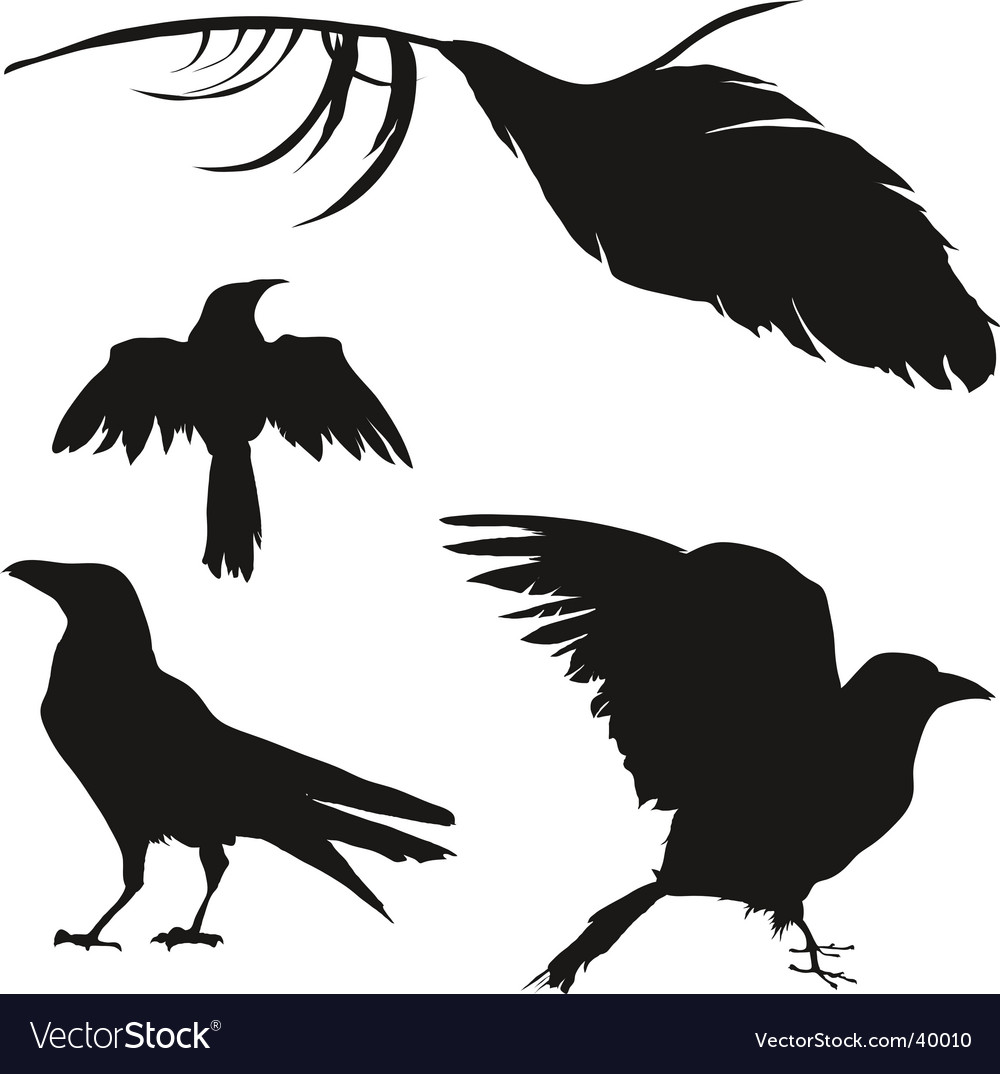 Crows and ravens vector