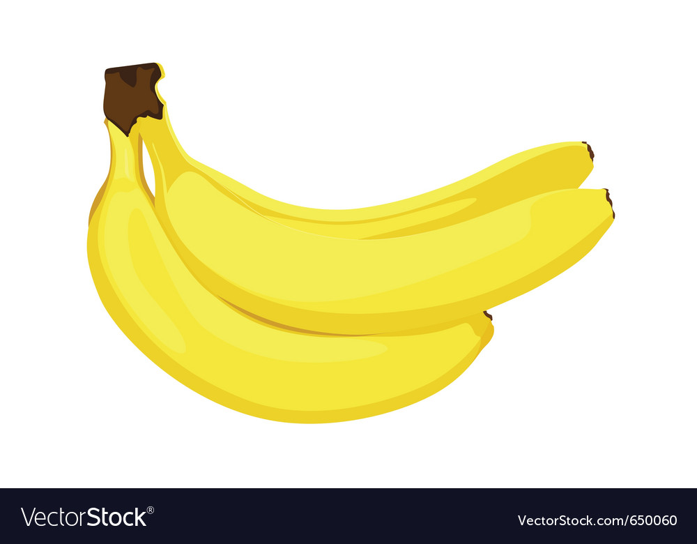 Ripe bananas vector