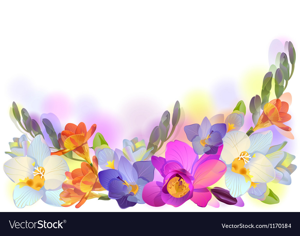 Horizontal background with gentle freesia flowers vector