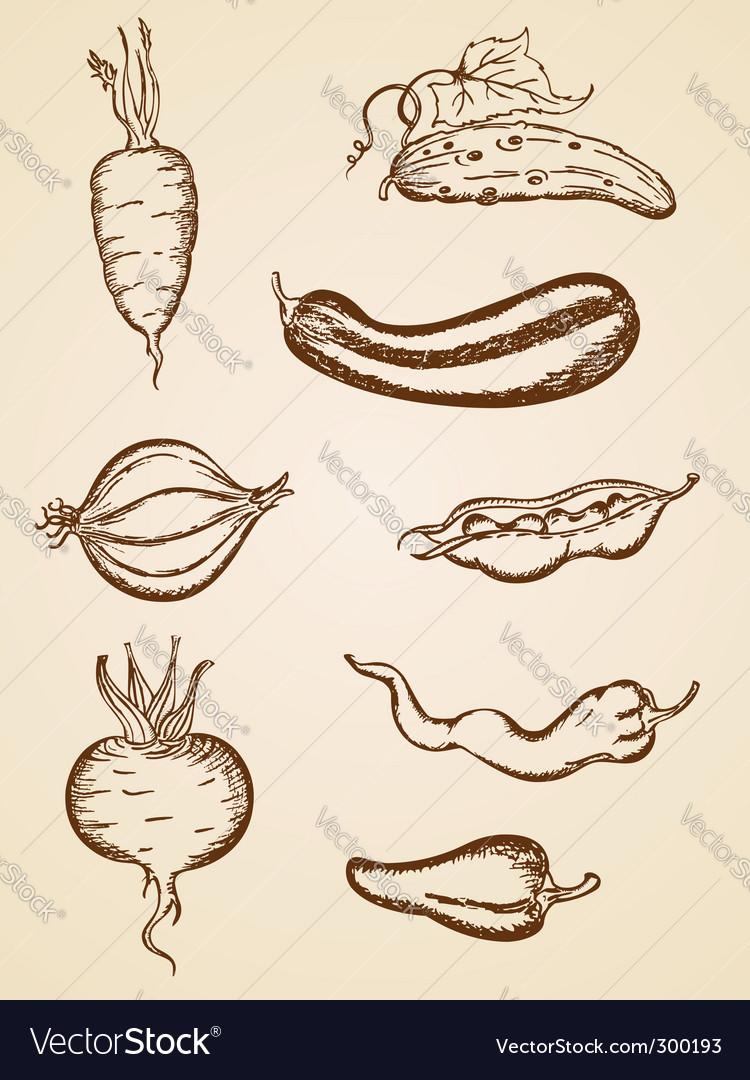 Vintage vegetables set vector