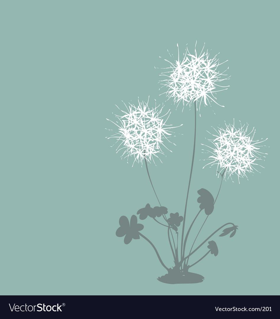 Free dandelion  vector