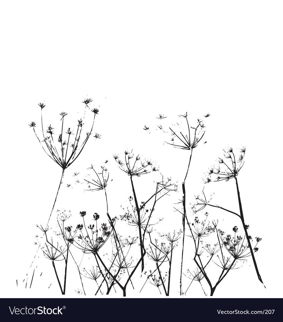 Free fennel flower vector