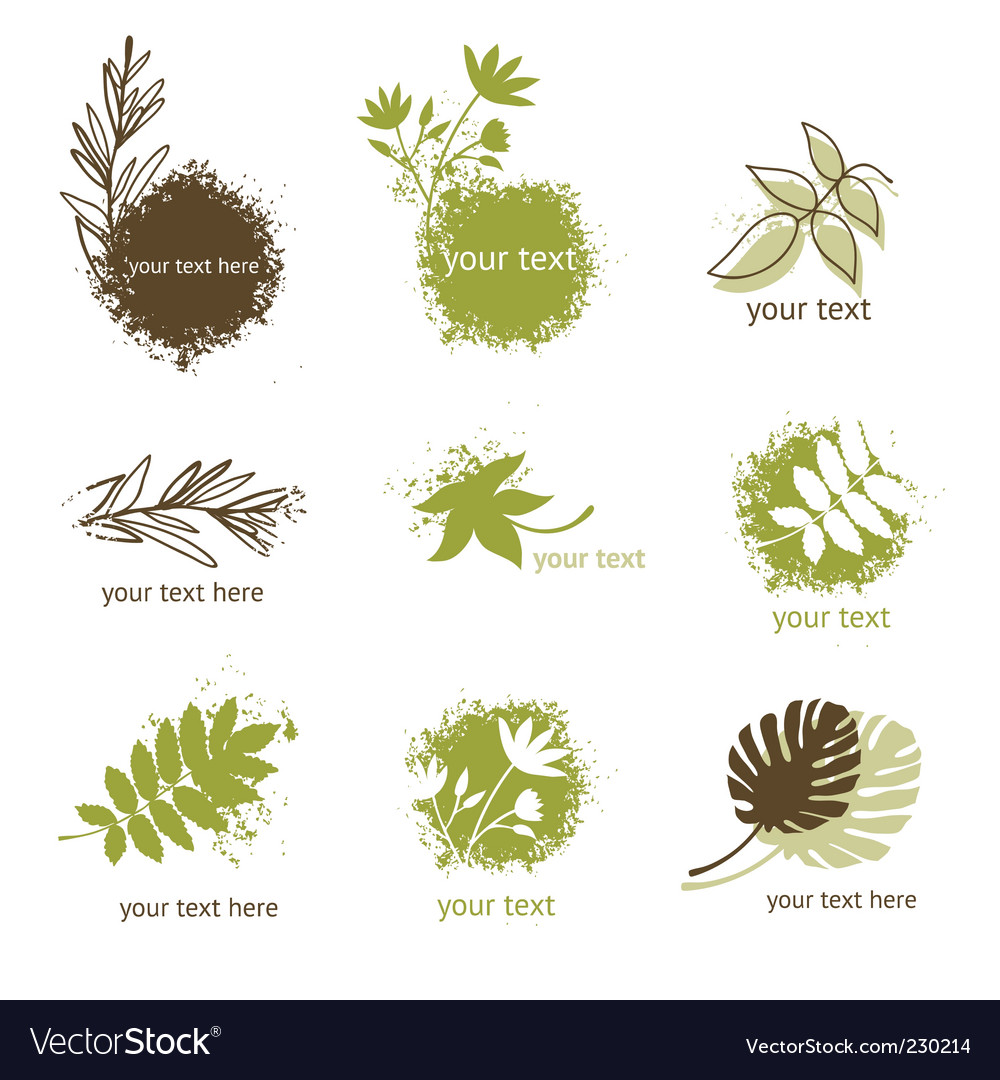 Set of floral elements vector