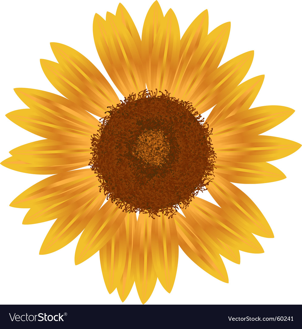 Yellow sunfower vector