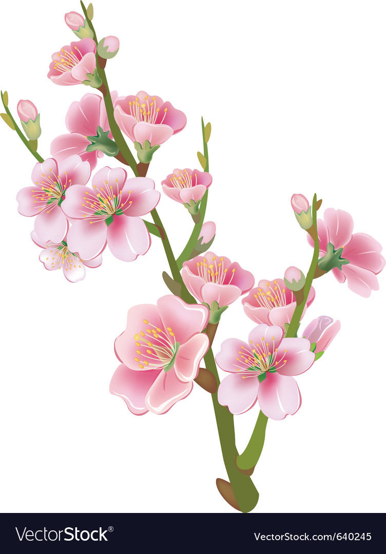 Flowering branch of sakura vector