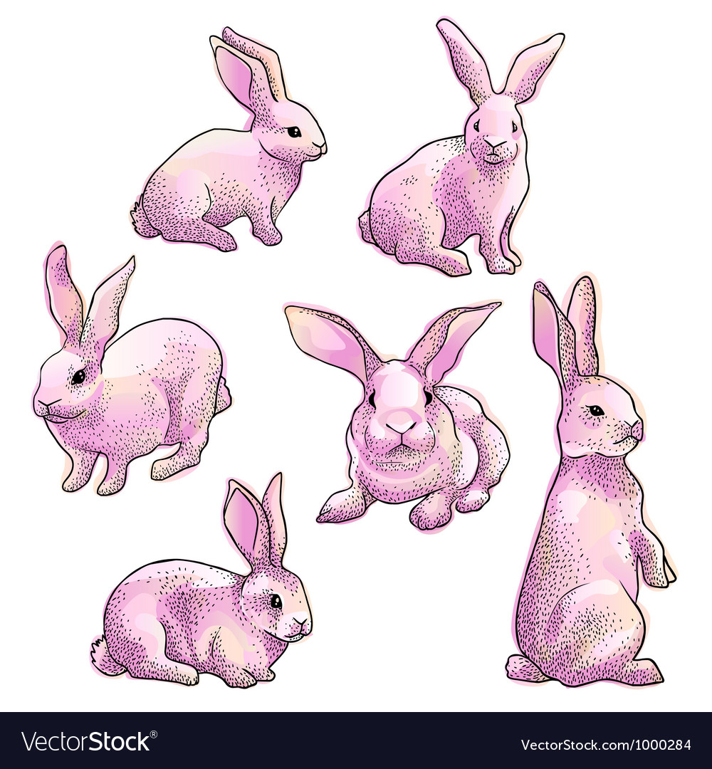 Isolated rabbits vector