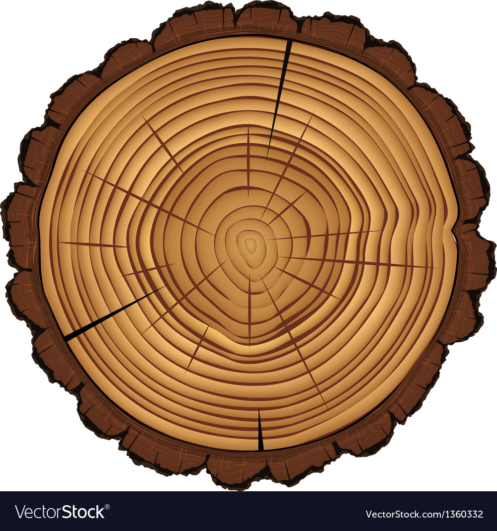 Cross section of tree stump isolated on white vector