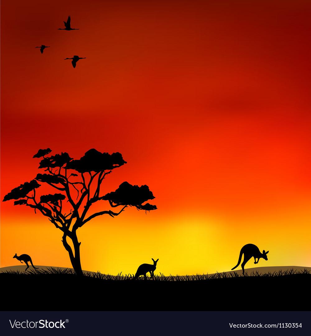 Kangaroos vector