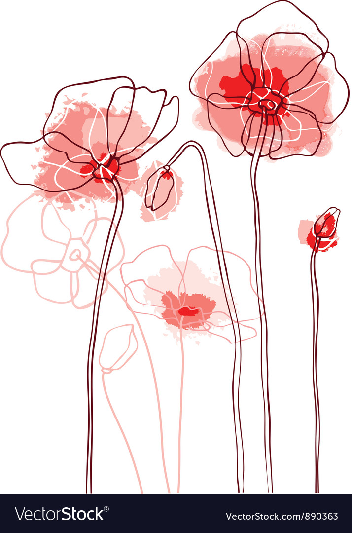 Red poppies on a white background vector