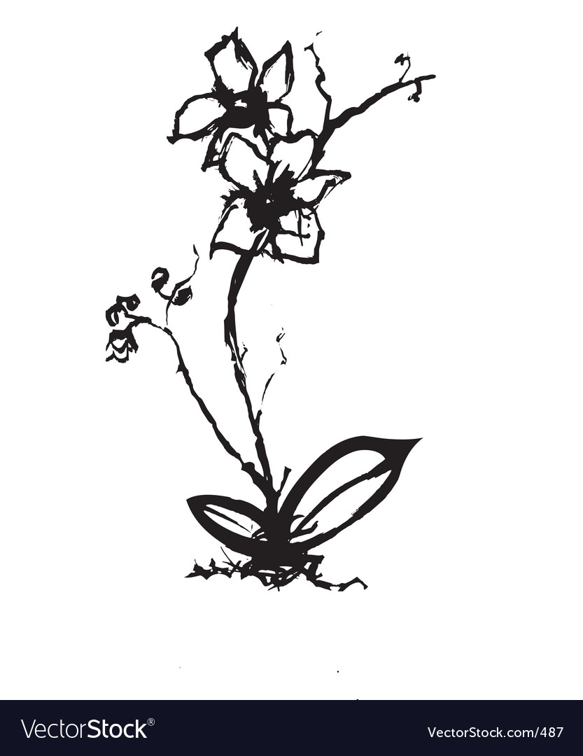 Free orchid vector