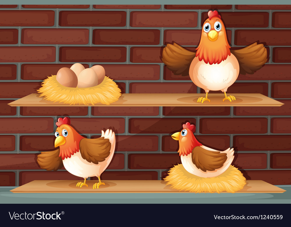 Positions of a hen laying eggs vector