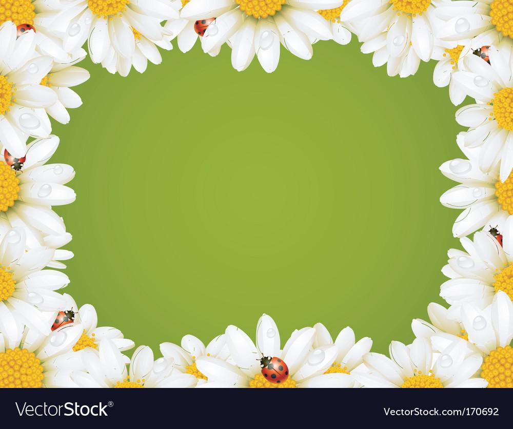 Chamomile floral frame vector