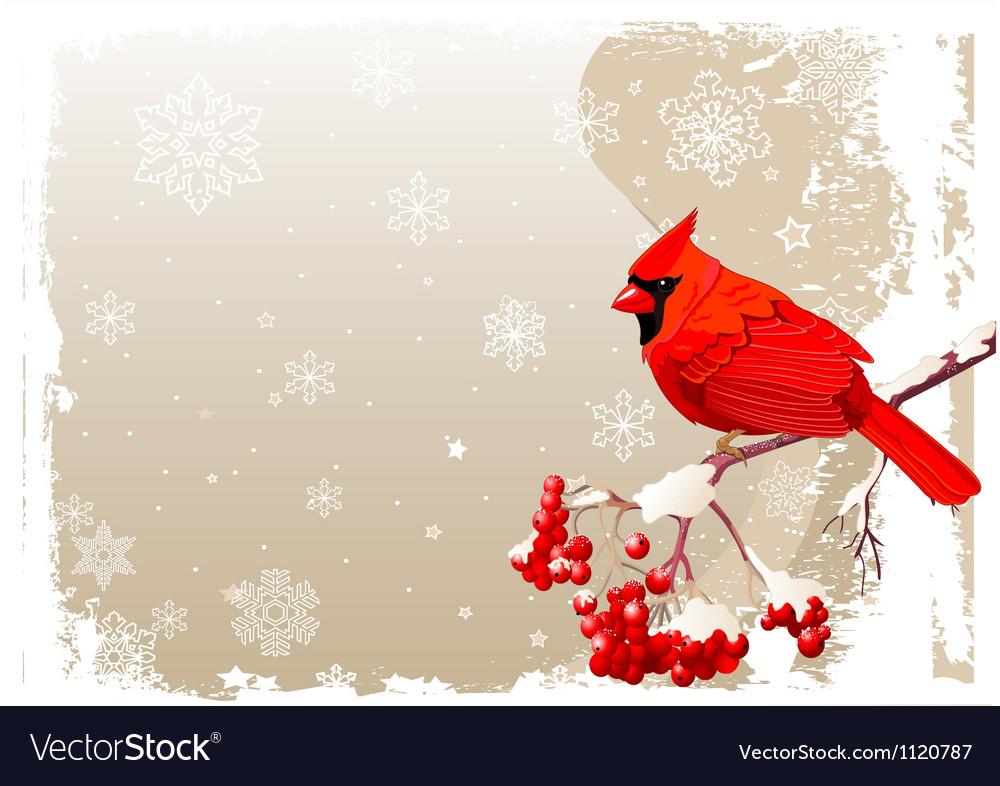 Red cardinal bird background vector