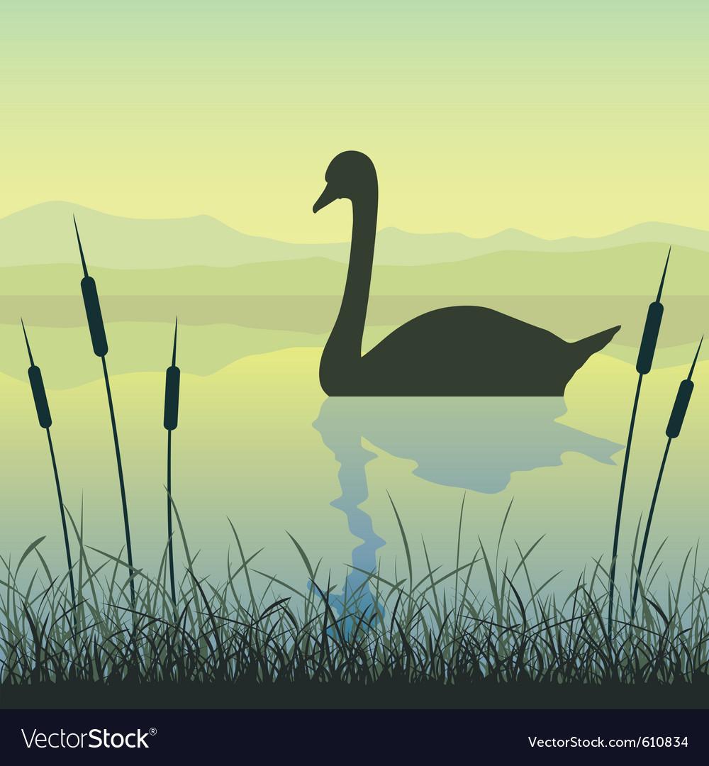 Swan on water vector