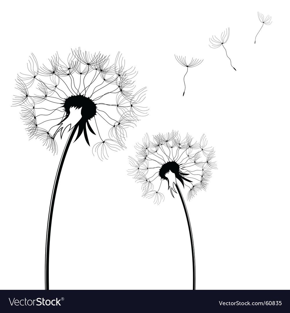 Dandelion vector by PNogueira - Image #60835 - VectorStock