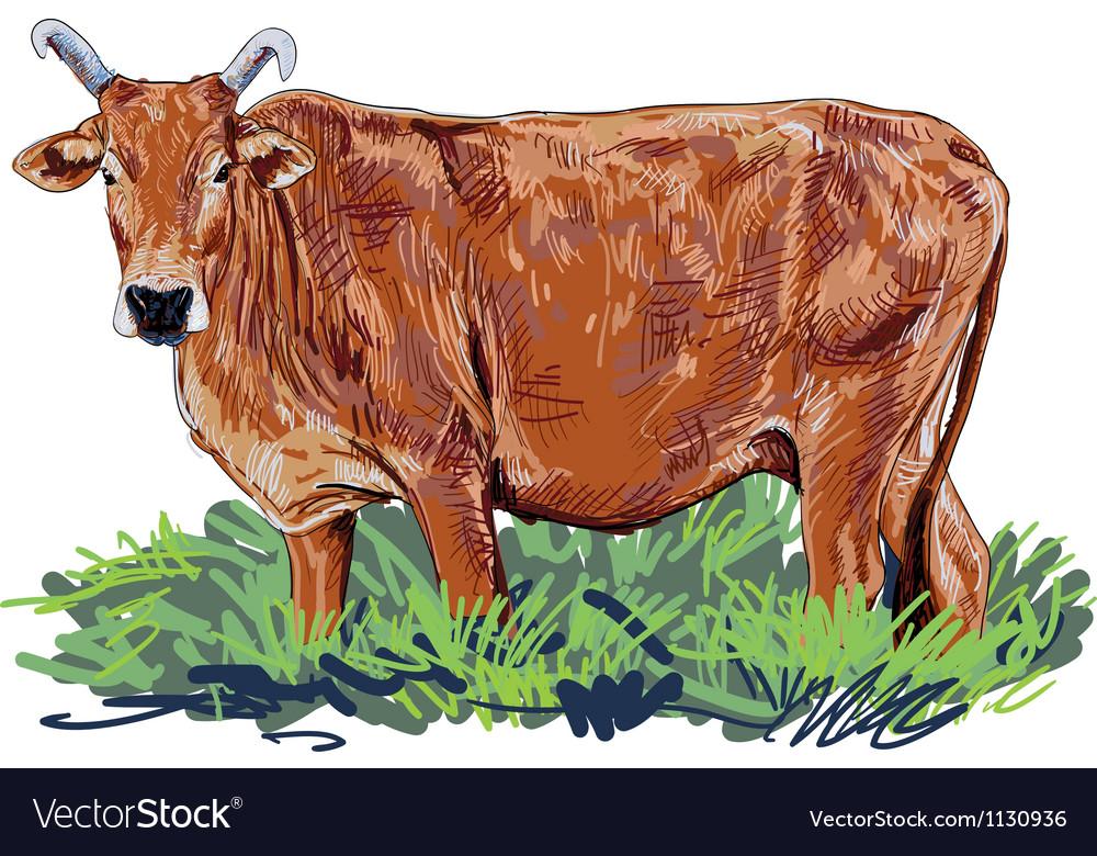 Curious cow vector