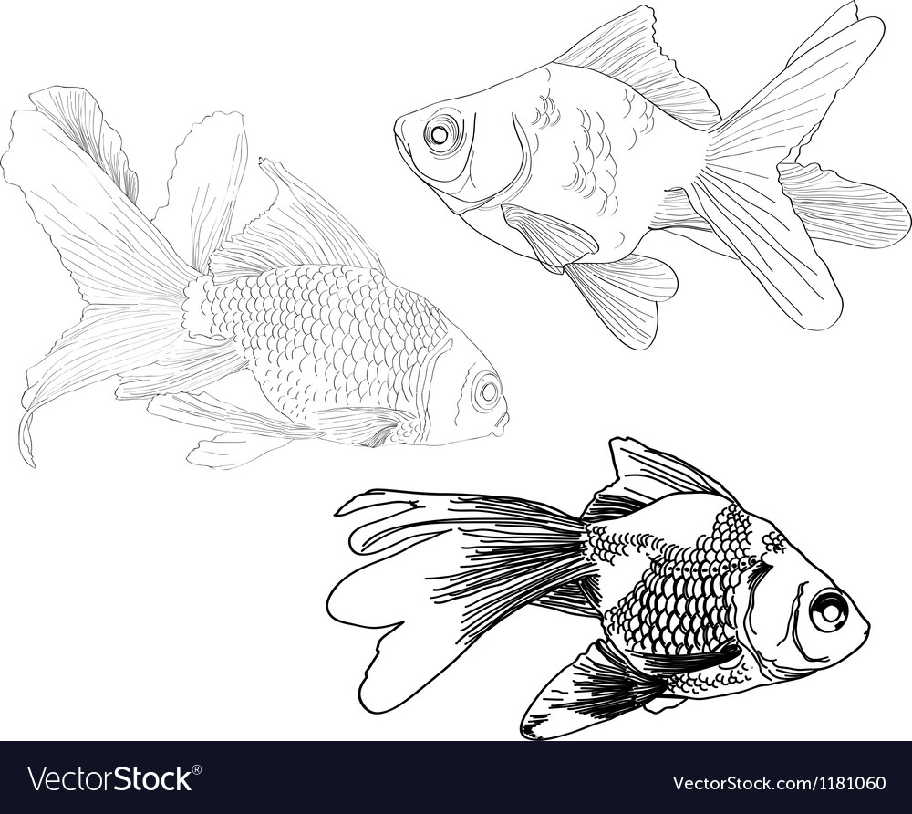 Hand drawing gold fishes vector