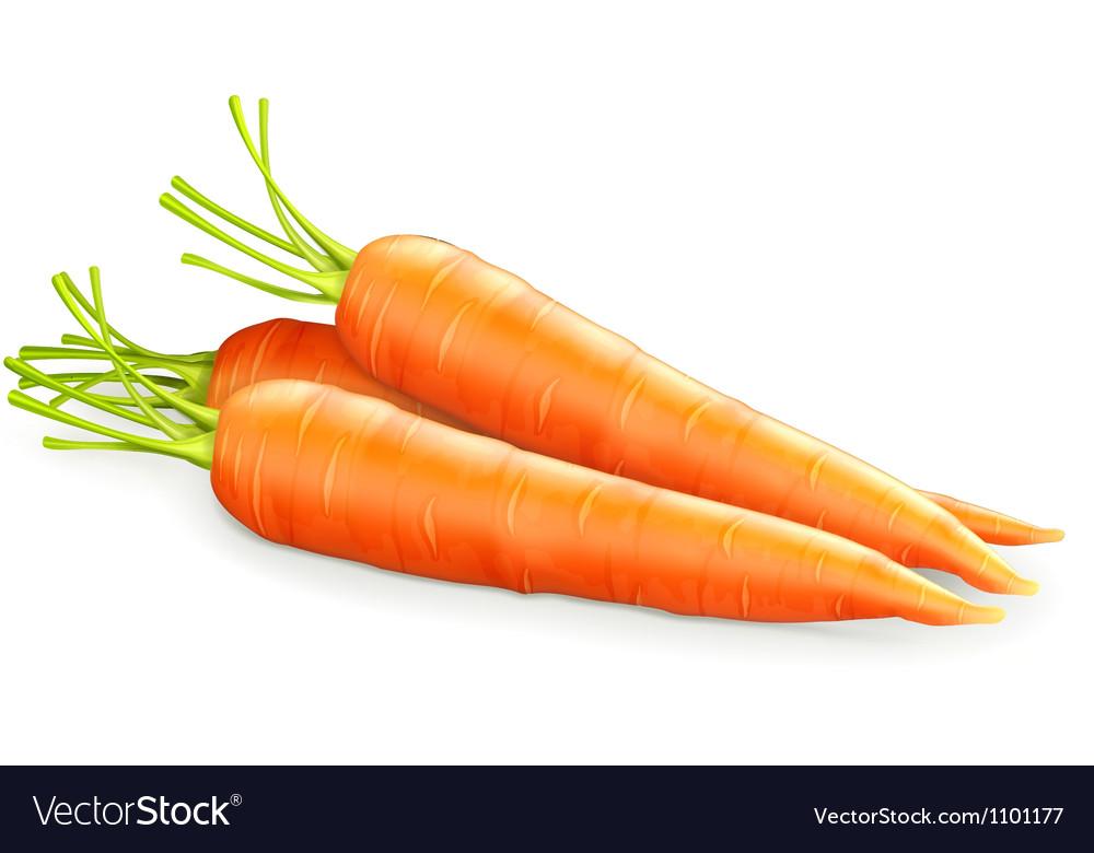 Carrots vector