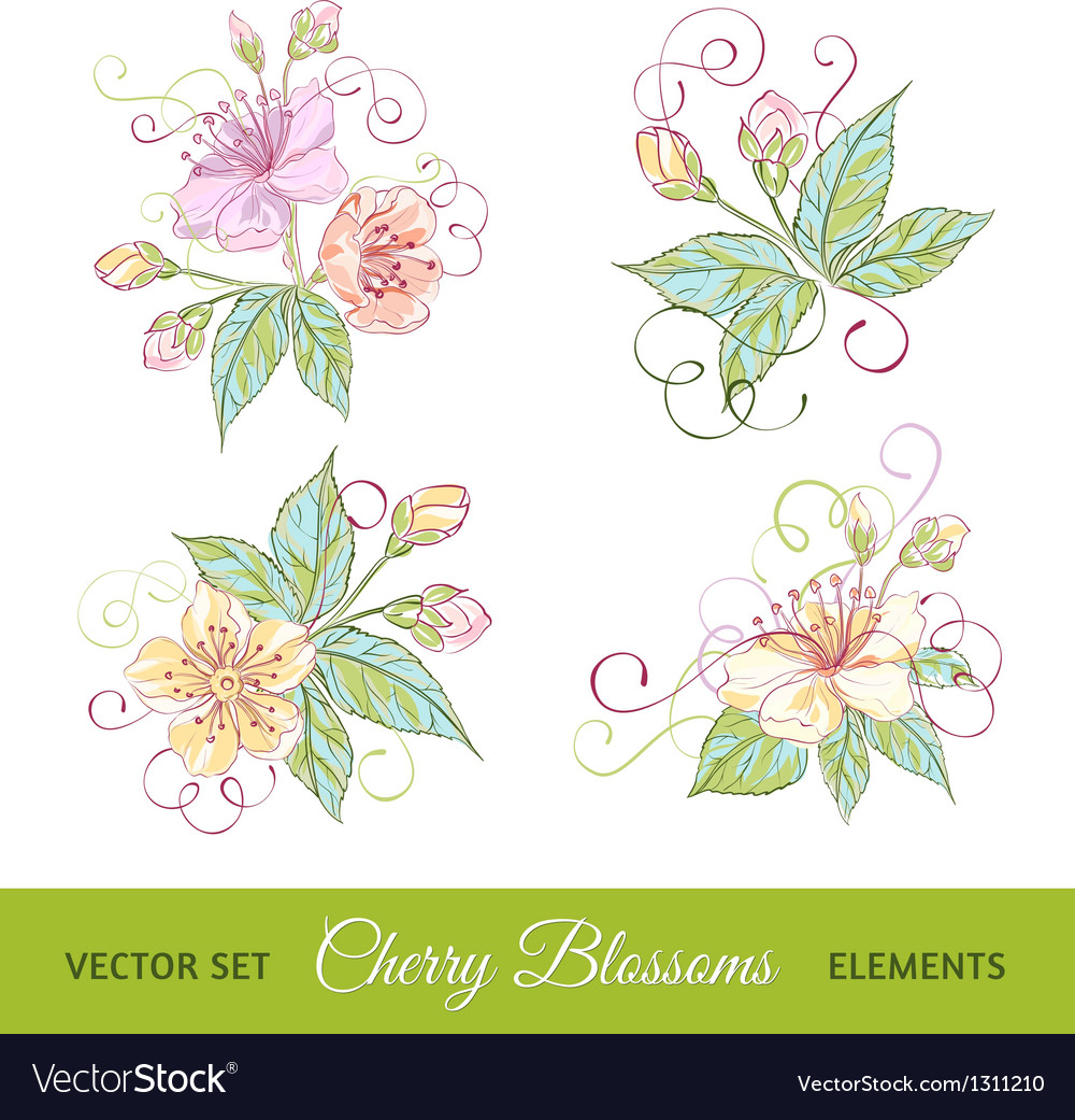 Set of cherry flowers vector
