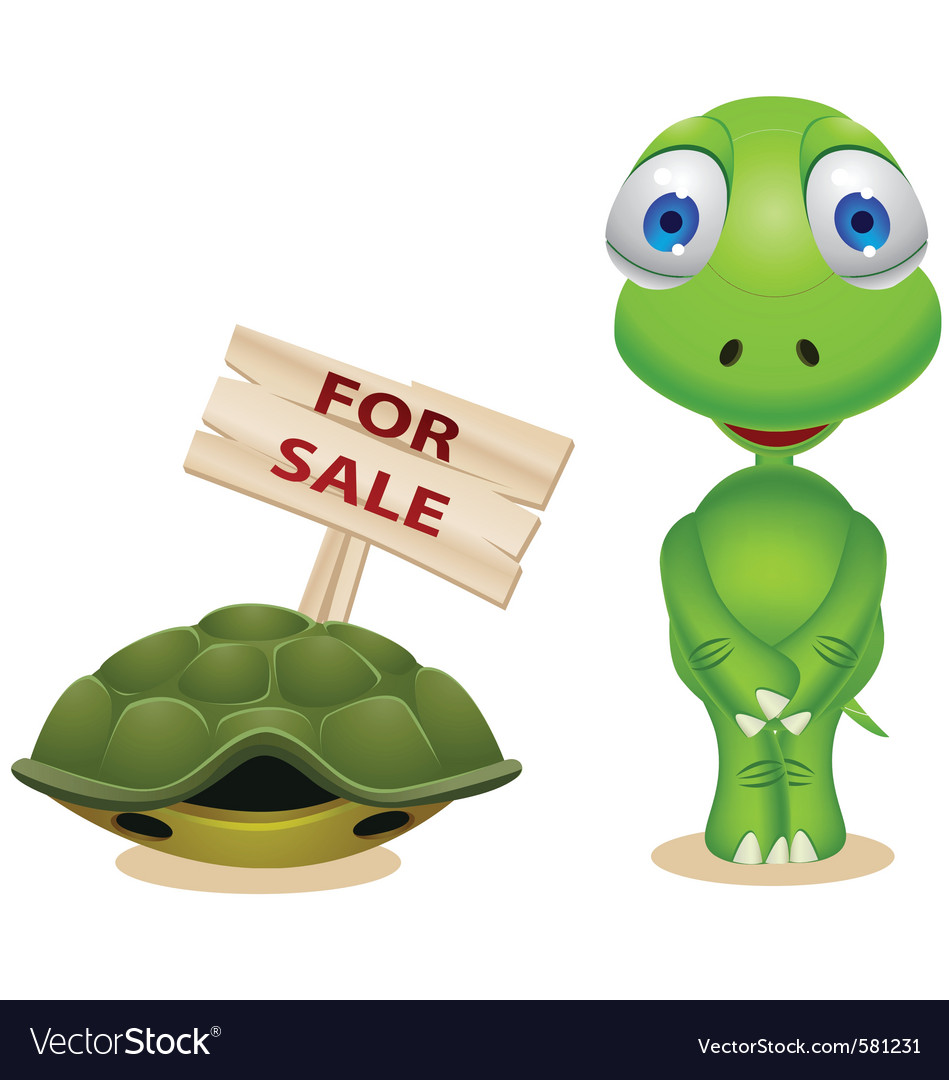 Go Back > Gallery For > Turtle Out Of His Shell Cartoon