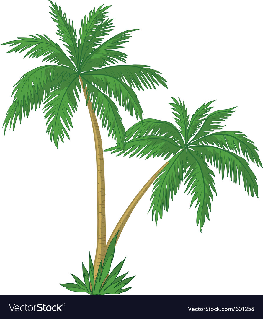 Palm trees vector
