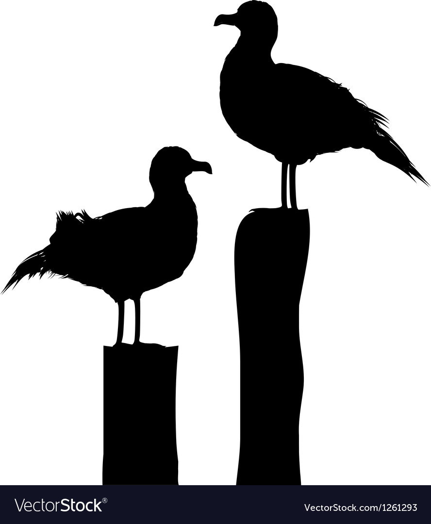 Sea gull silhouettes vector