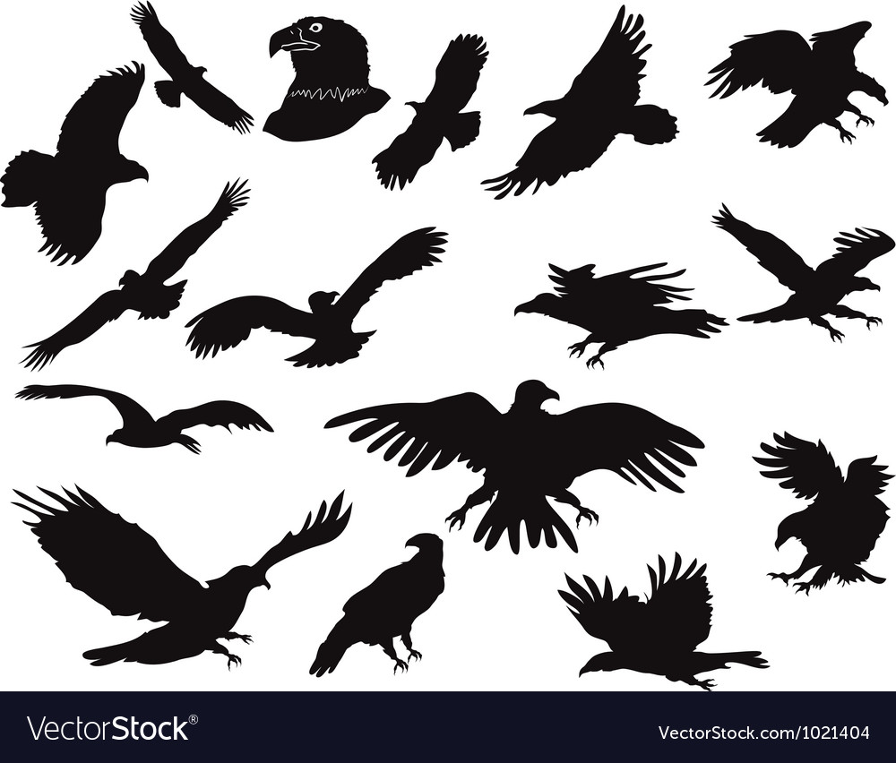 Silhouette of eagles vector