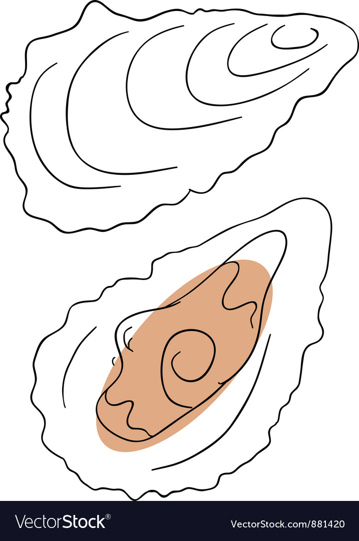 Oyster vector by Penguinn - Image #881420 - VectorStock Open Oyster Shell With Pearl