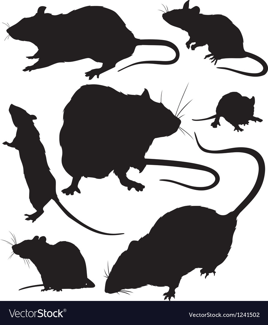 Rat silhouette vector