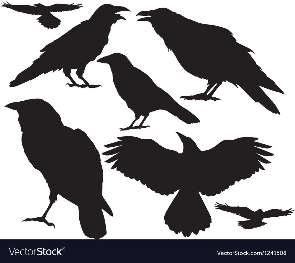 Raven silhouette vector