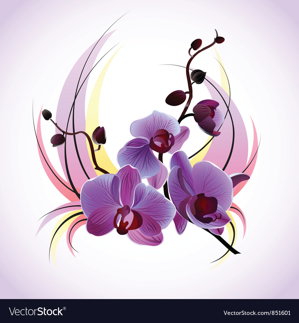 Greeting card with orchids vector