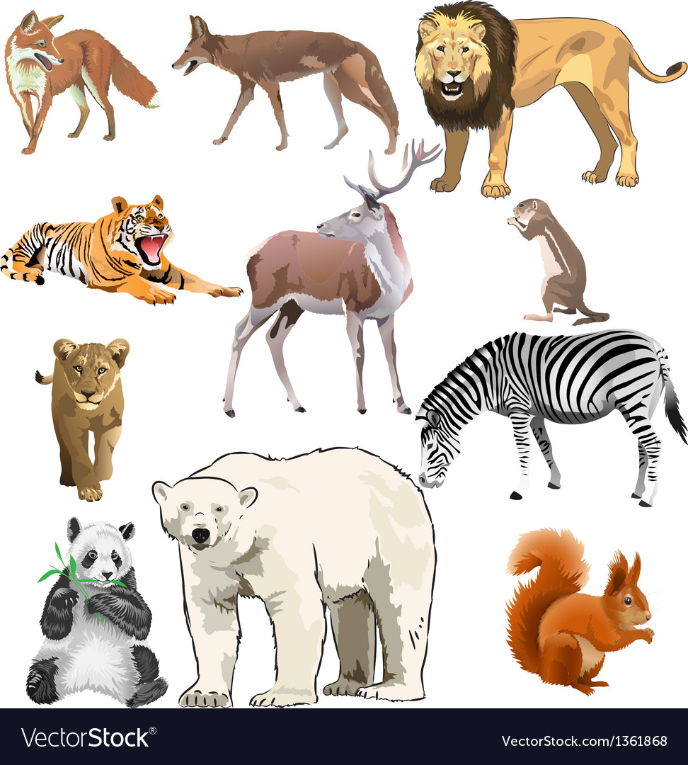 Different wild animals together