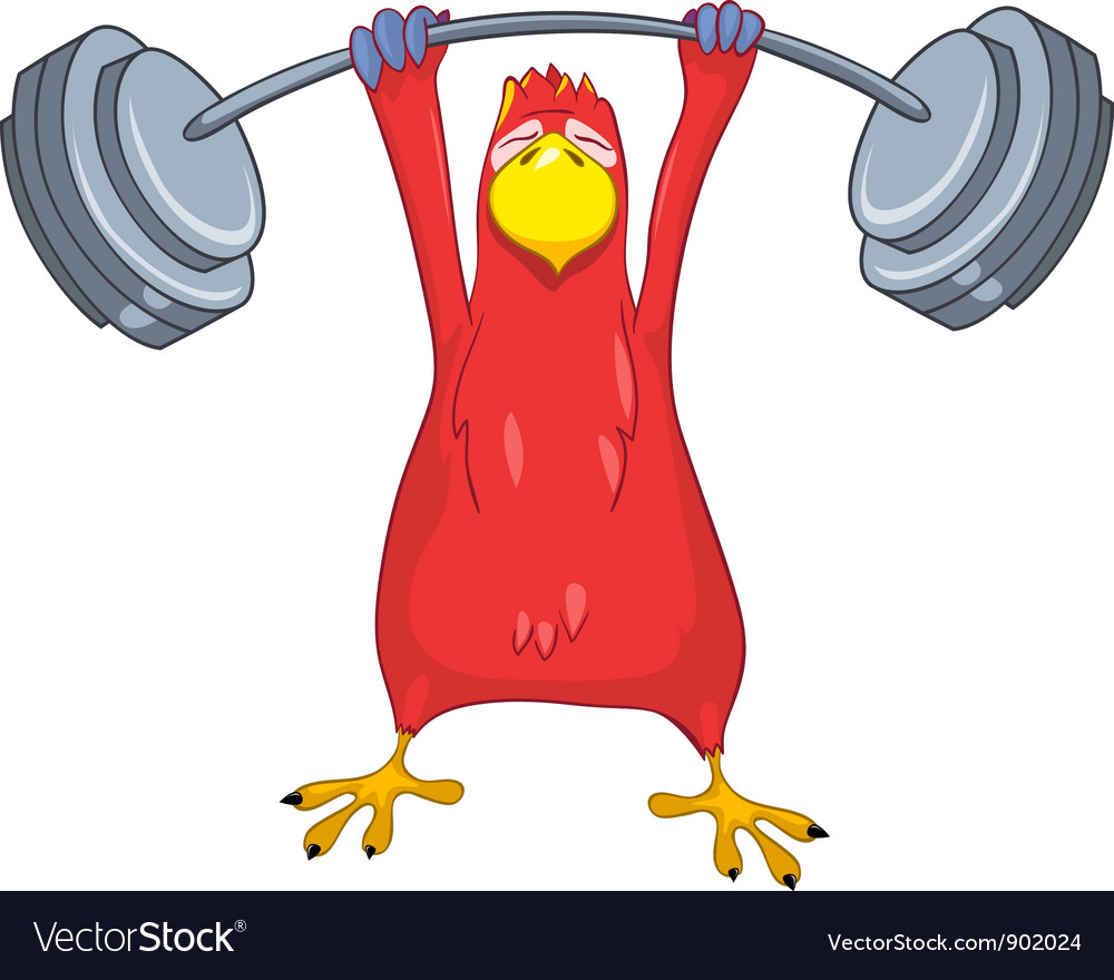 Funny parrot gym vector