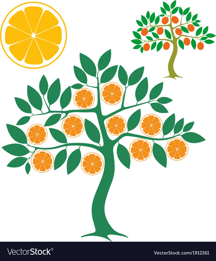 Orange tree vector Orange Tree Vector