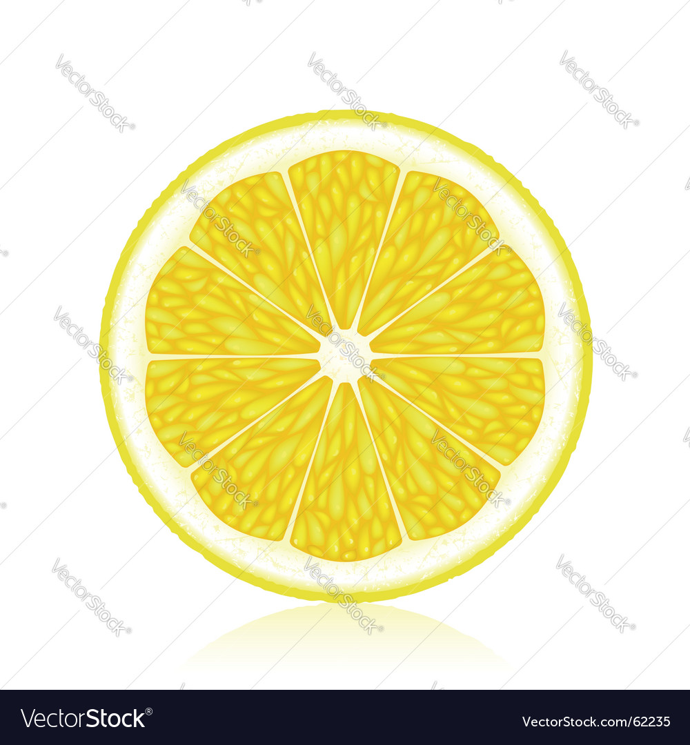 Lemon vector by elenashow image 62235 vectorstock