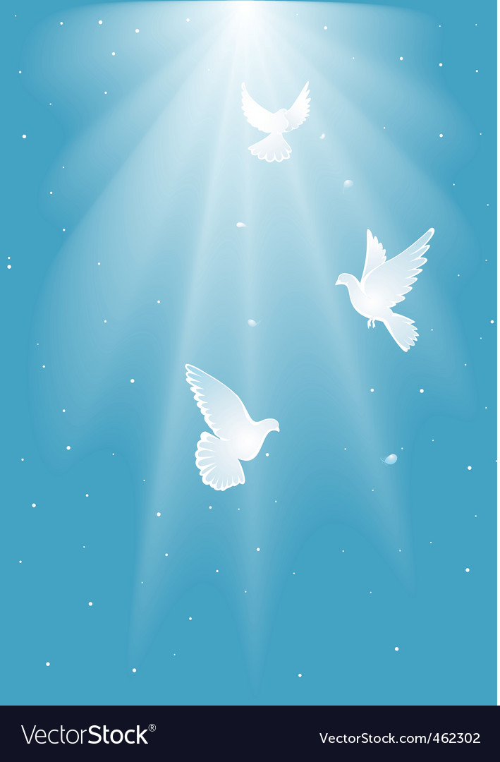 Three white dove vector