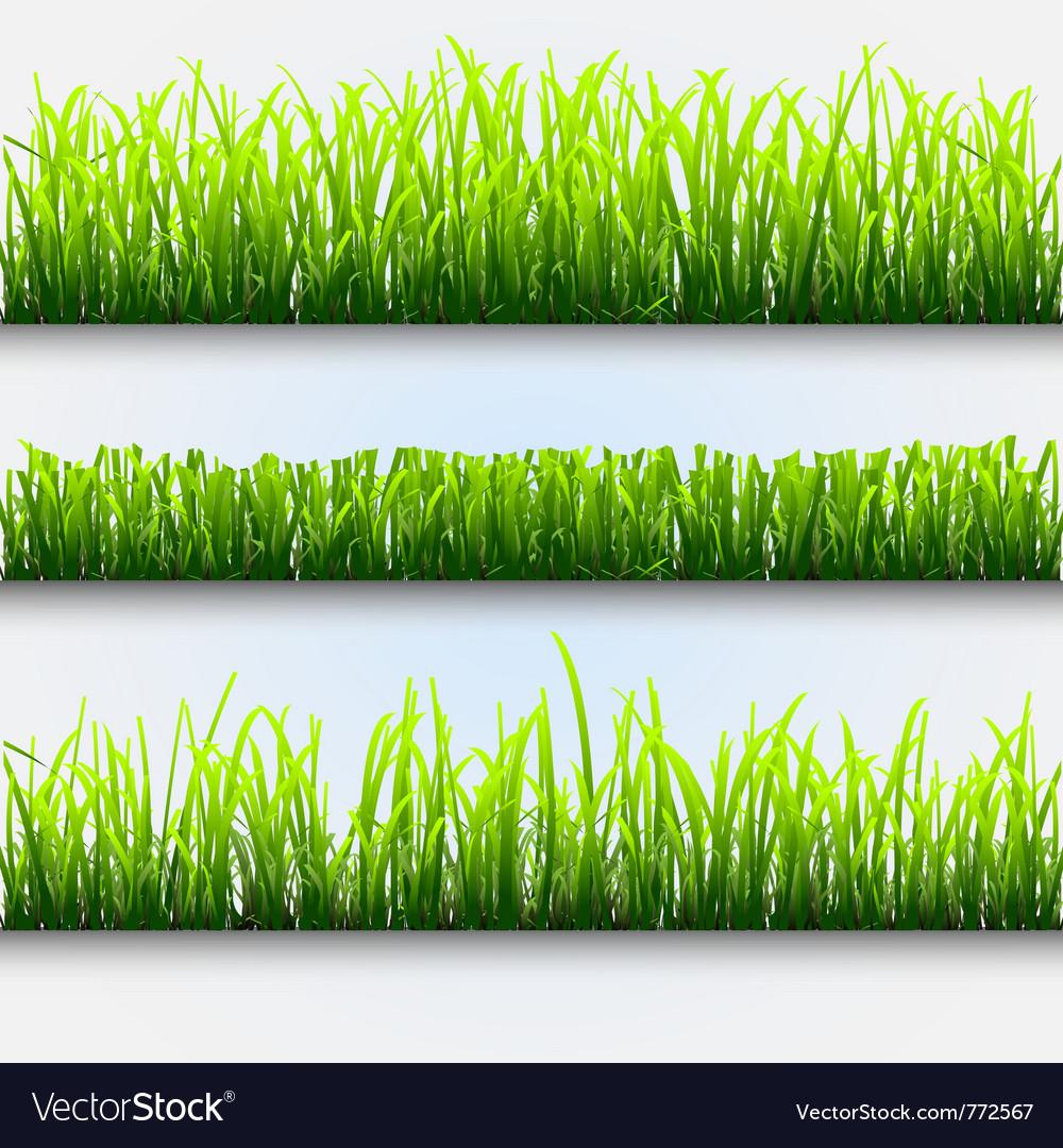 Green grass for design vector