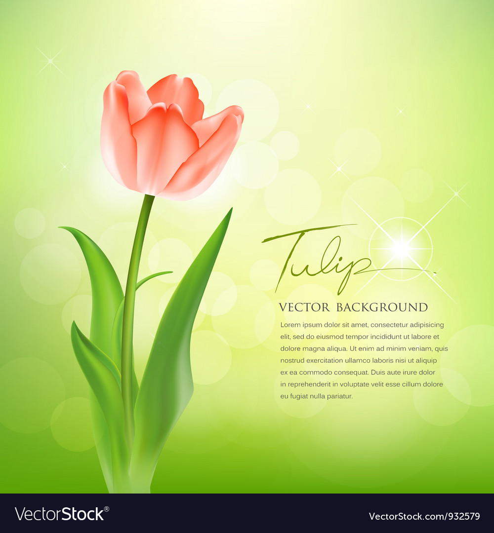 Beautiful tulips on nature vector