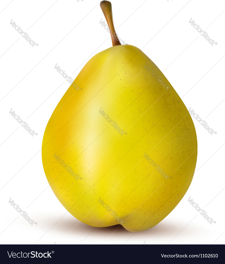 Rpe pear isolated on white vector