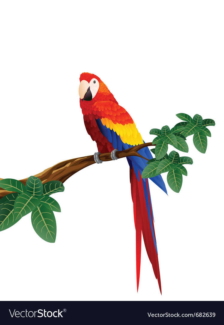 Macaw bird vector