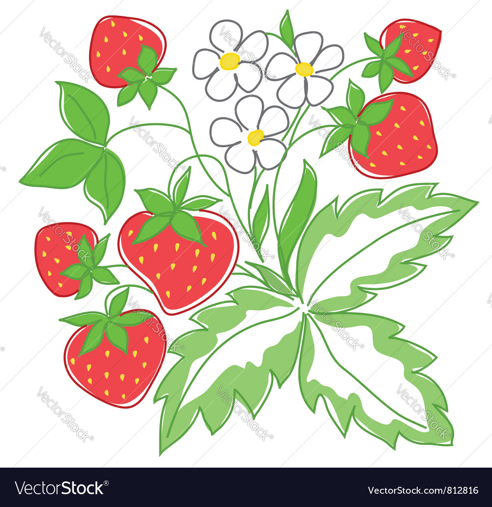 Red strawberry vector