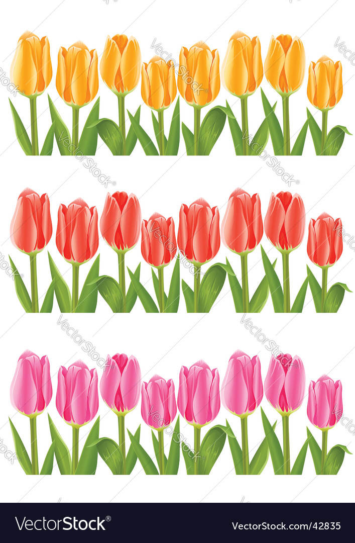 Colour tulip flowers set vector